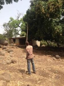 Sally Bilaly Sow , avec la gaule en mains, photo : Mamadou Kaba